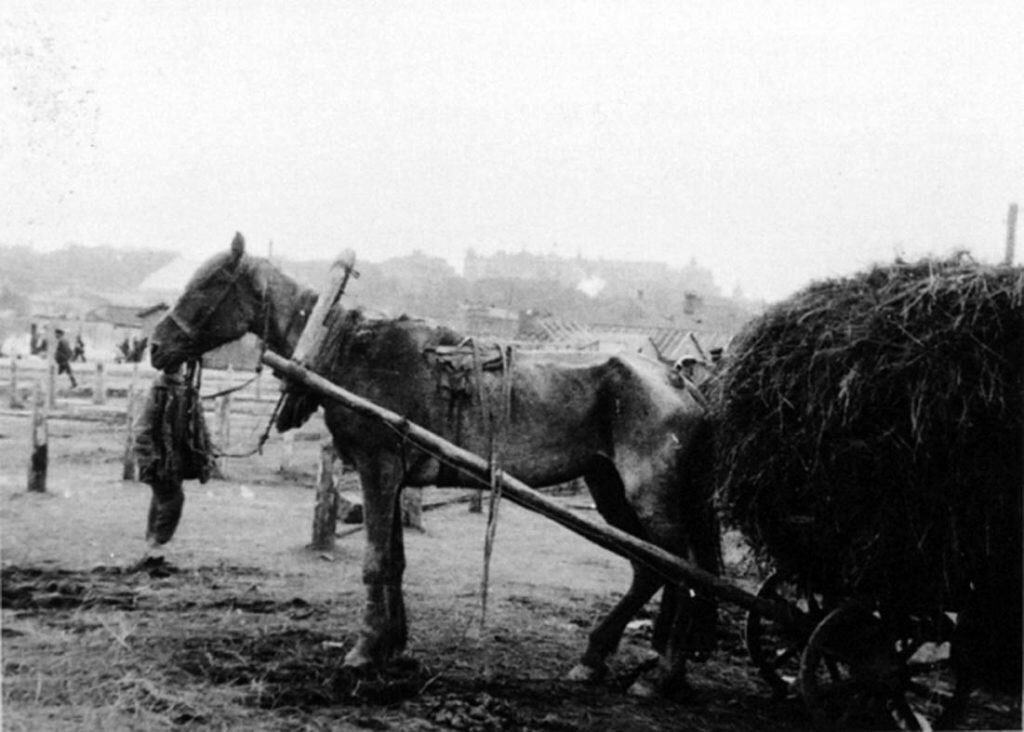 Horse_of_Great_Famine_2